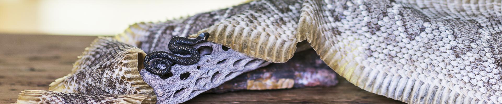 Level 1 – die Schlange, im Schamanismus, Sachamama genannt